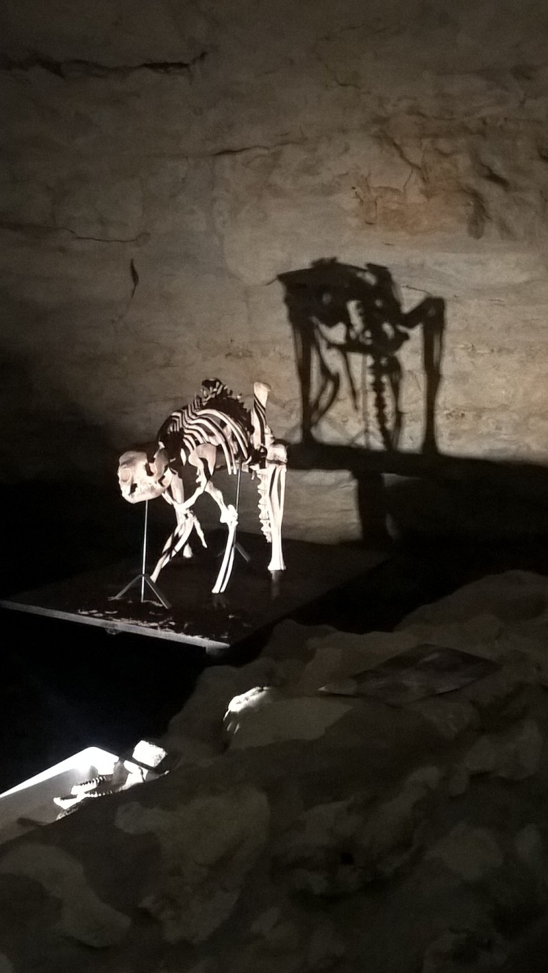 Scheletro del canguro gigante in mostra dentro la grotta