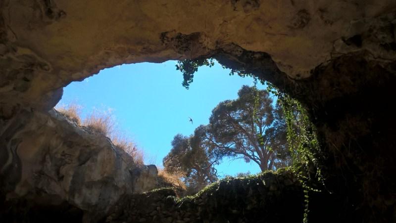La vista dall'interno verso l'esterno di una delle grotte di Naracoorte