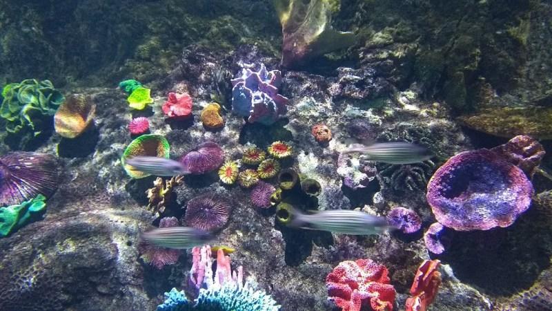 SEA LIFE Melbourne Aquarium: vasca dell'acquario con pesci e coralli