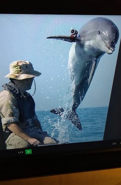delfino con videocamera sulla pinna