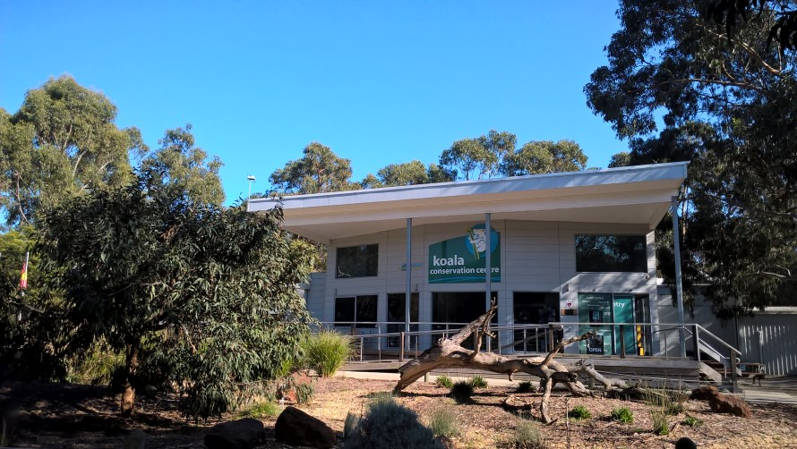 koala conservation centre phillip island ingresso