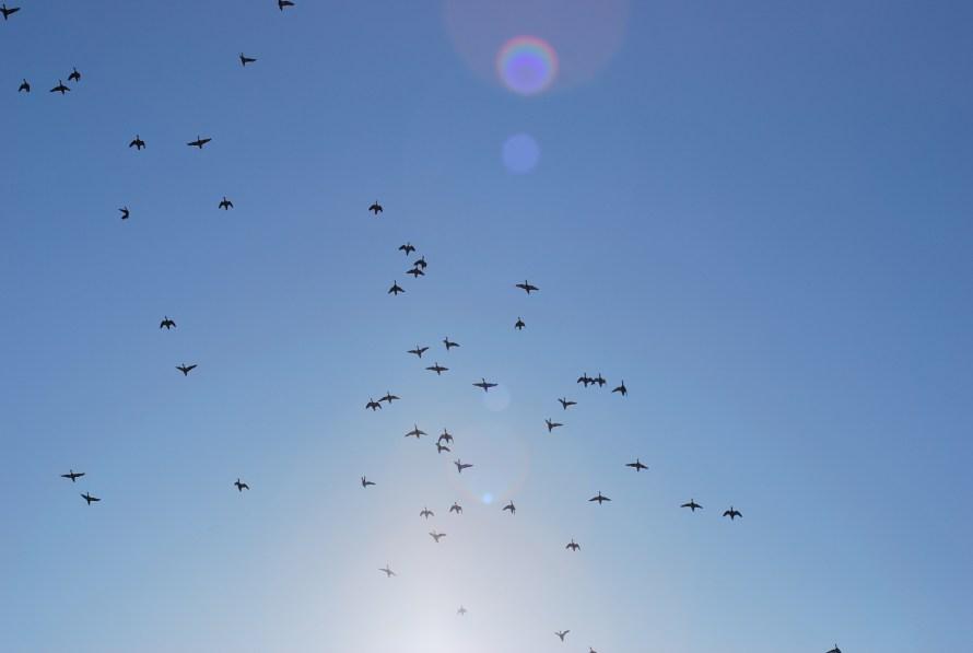 uccelli-in-volo-controsole