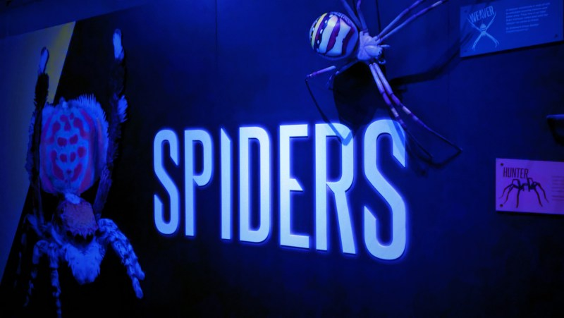 mostra-launceston-tasmania-spiders-ragni