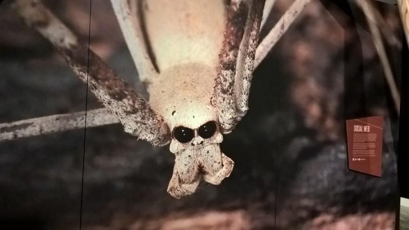ragno imbruttito