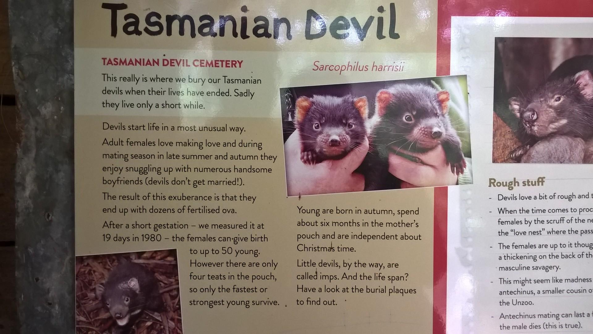 Gratuito della Tasmania dating