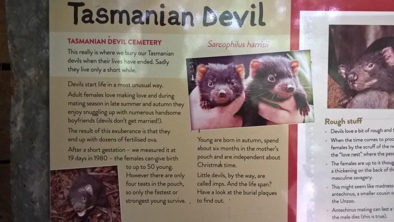 diavoli della tasmania bonorong pannello 2