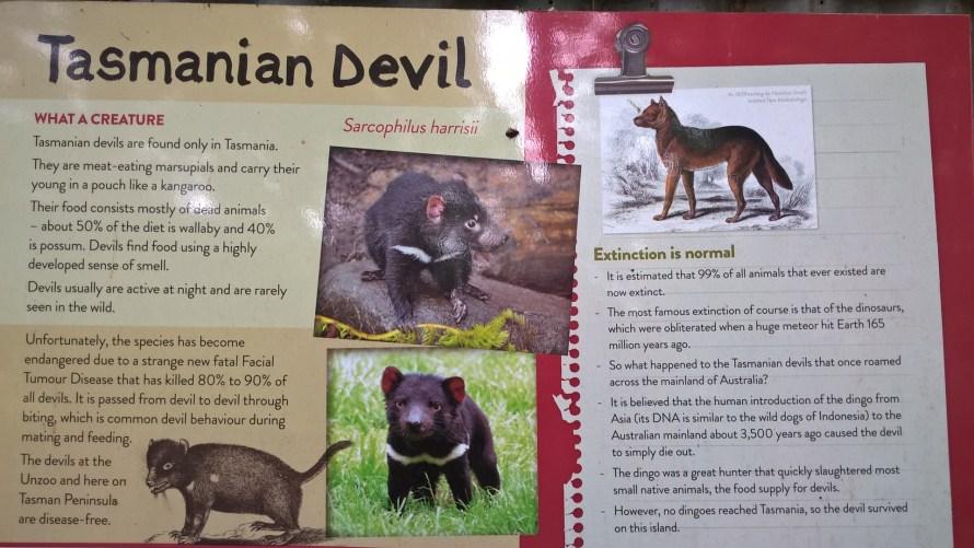 diavoli della tasmania schermata bonorong