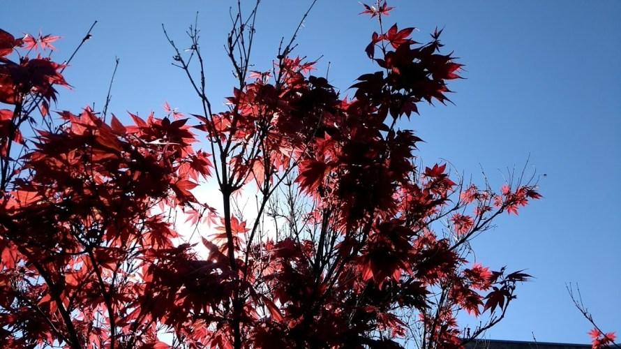 sole-dietro-a-foglie-rosse