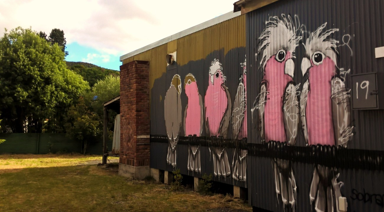 queenstown street art pappagalli galah
