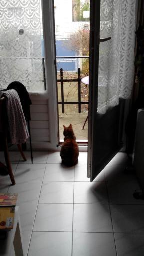 gatta di schiena che guarda fuori dal balcone