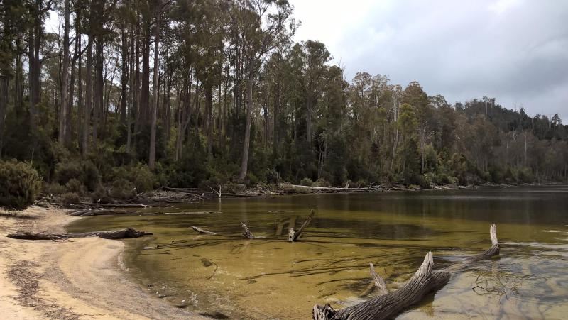 lago semipaludoso con sabbia e acqua verde