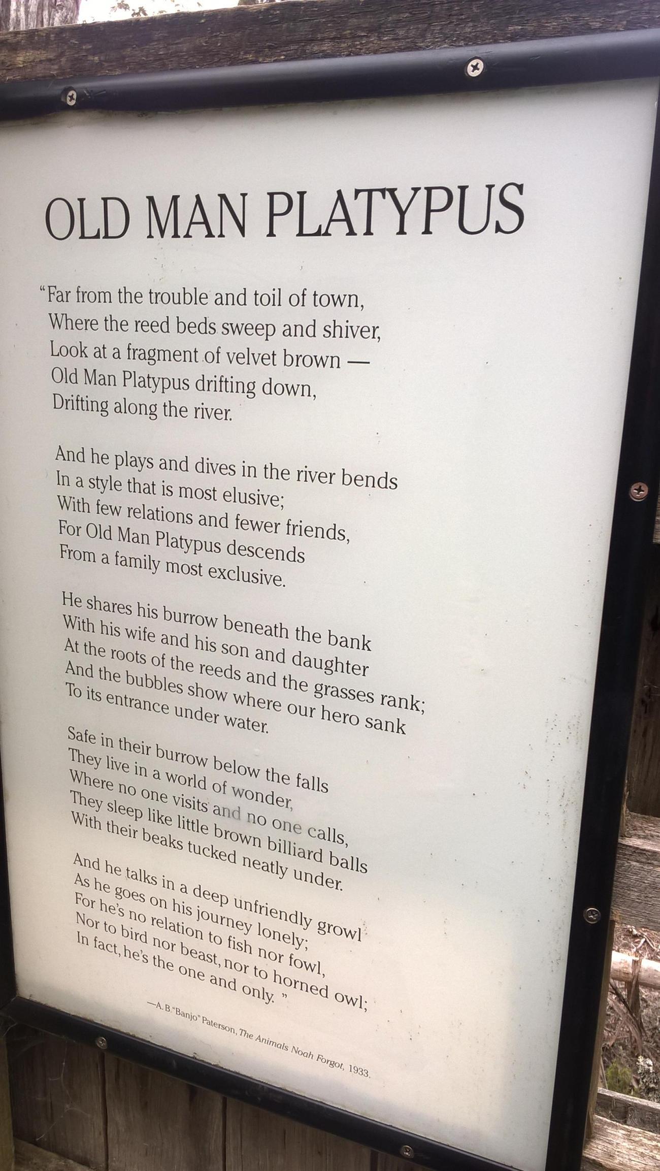 poesia in inglese sull'ornitorinco