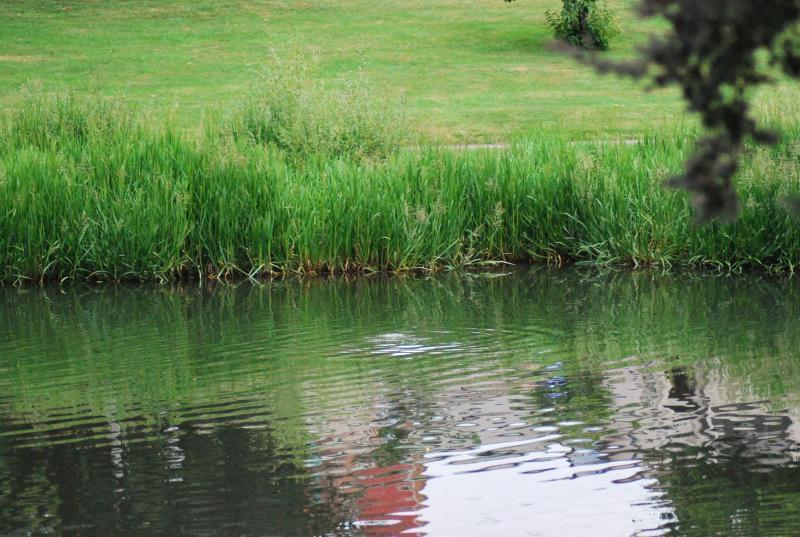 riva di fiume erbosa adatta alla tana dell'ornitorinco