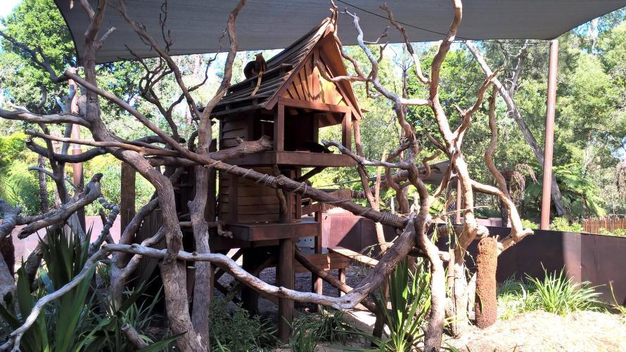 casa dei canguri arboricoli tra i rami dell'albero