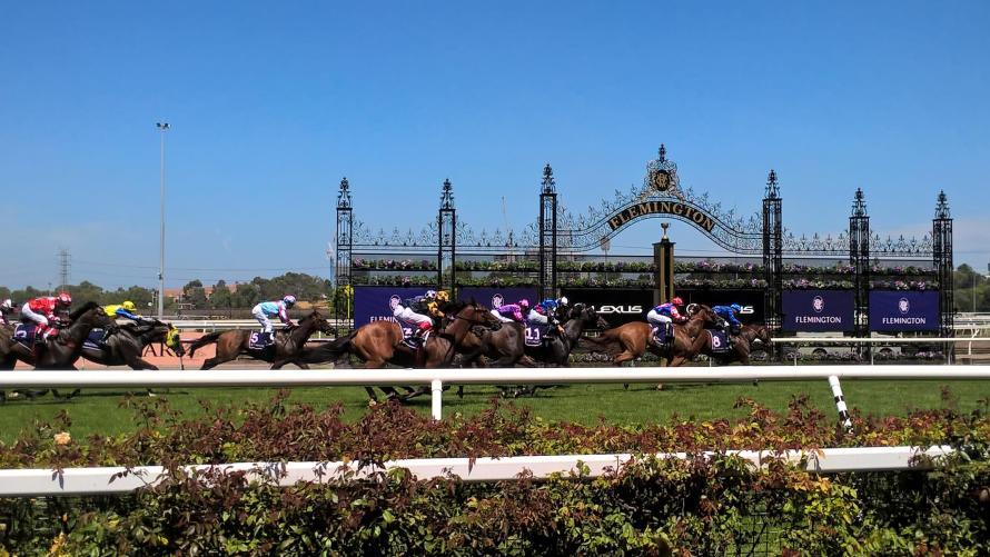 cavalli in corsa all'arrivo alle melbourne races flemington racehorse