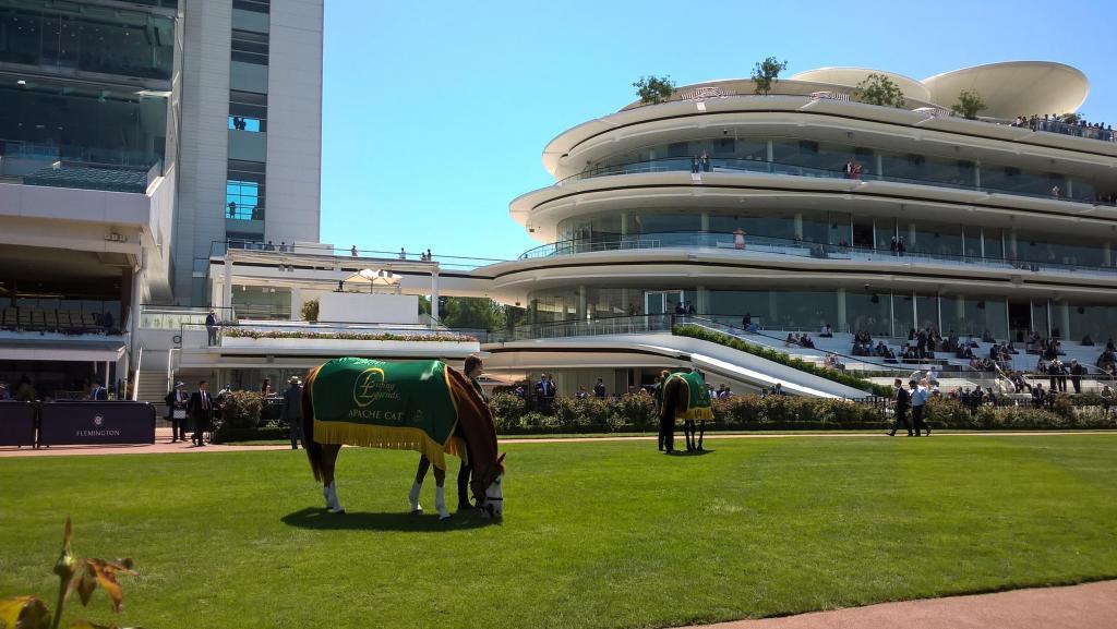 cavallo che bruca con guadrappa alla flemington racecourse