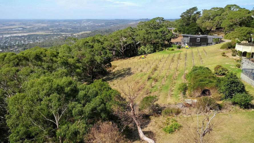 colline australiane con vigneto