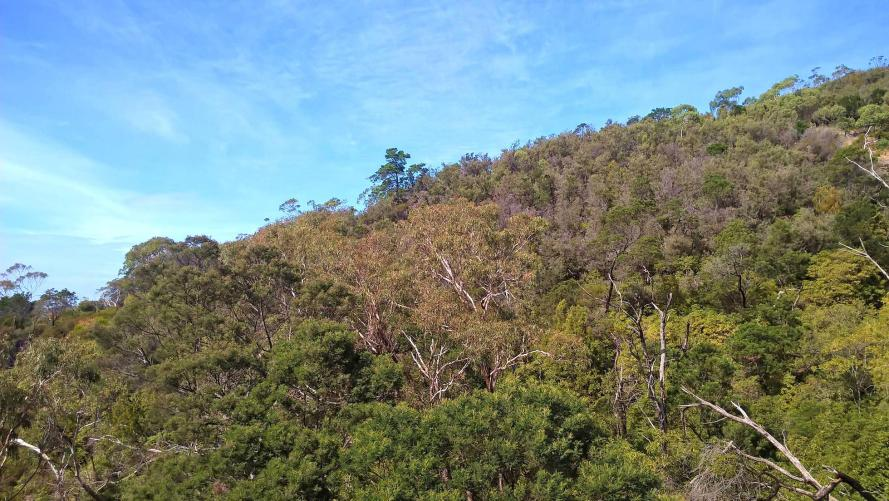 vegetazione australiana bush alberi e cielo