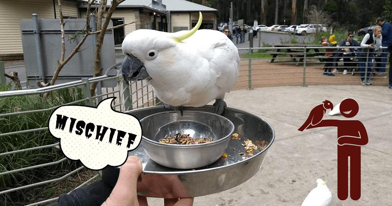 dove vedere e nutrire gli uccelli a melbourne australia