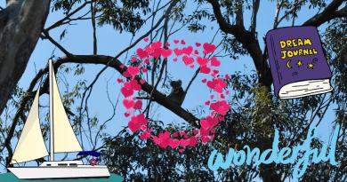 dove vedere koala in libertà da vicino