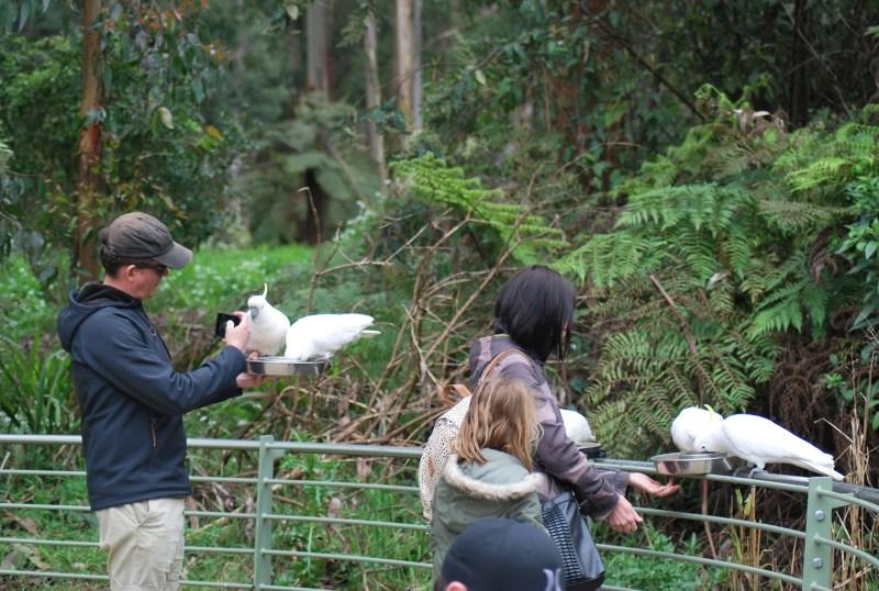 piattaforma dove i turisti nutrono gli uccelli