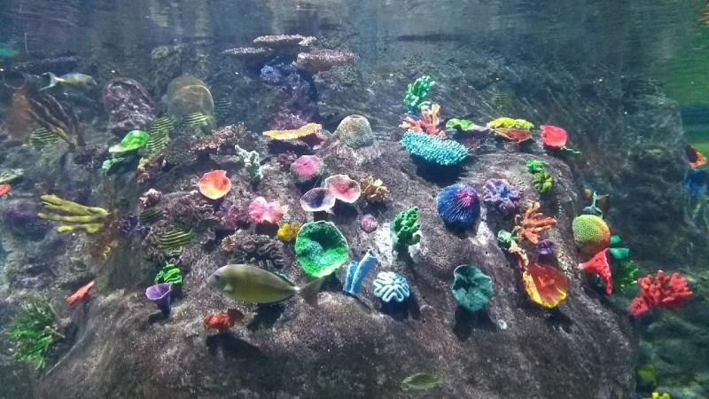 La bellezza della natura: coralli colorati