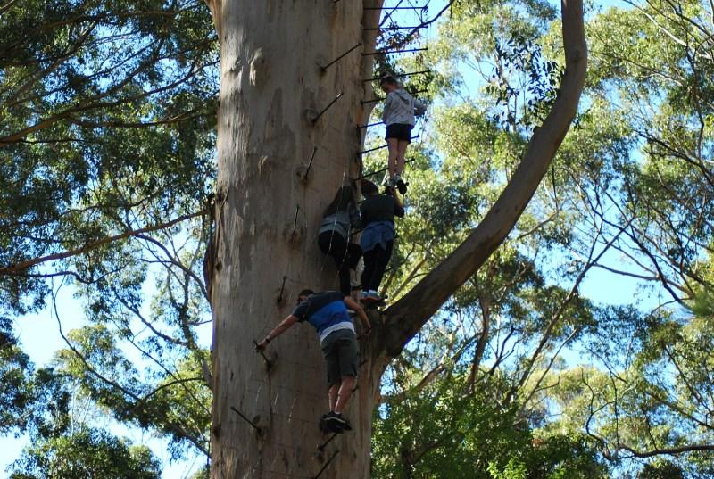 gente che si arrampica su un albero a pioli