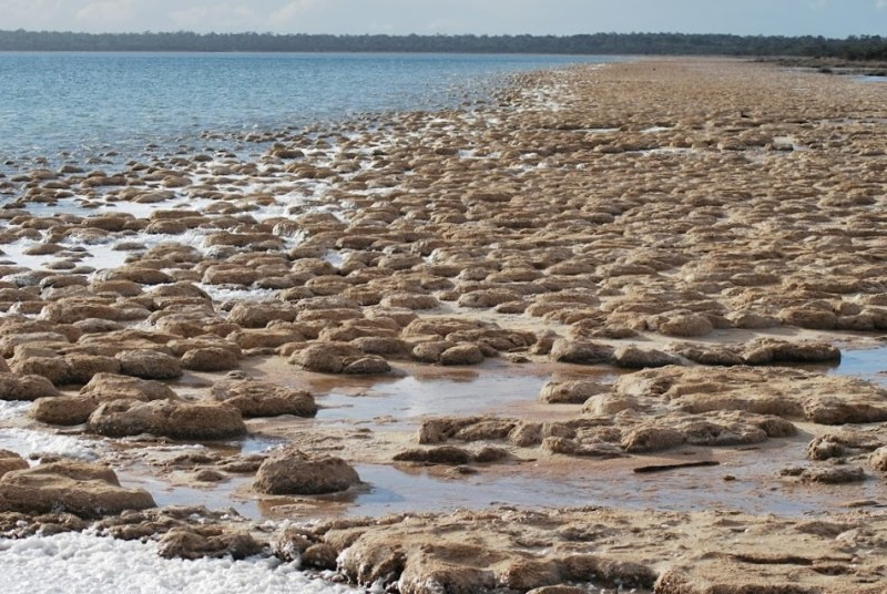 distesa di tromboliti preistorici nel lago