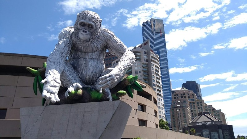 Gorilla gonfiabile che osserva gli australiani diventare stupidi uno a uno