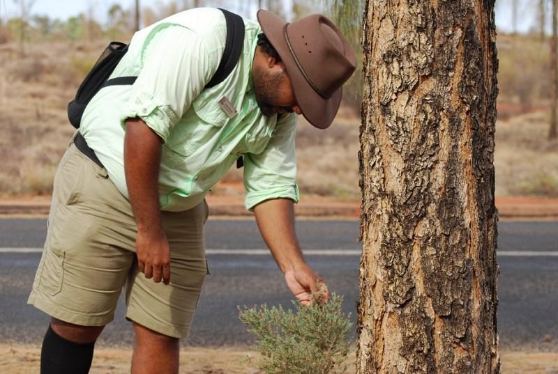 Guida aborigena mostra e spiega piante autoctone