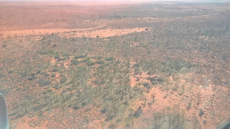 La terra rossa australiana e la sua vegetazione dell'Outback