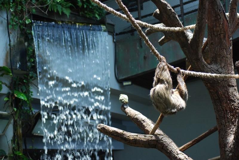 bradipo appeso accanto a una cascata artificiale al Green Planet Dubai