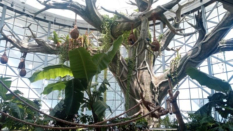 The Green Planet Dubai interno con vegetazione