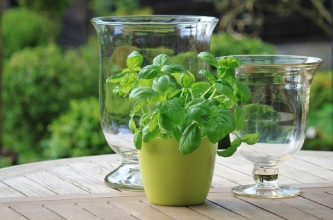 How to Make Pesto alla Genovese - Lucy Williams Global