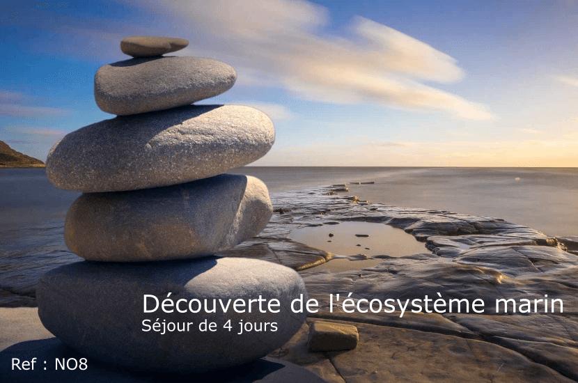 Découverte de l'écosystème marin