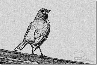 Cocky Robin