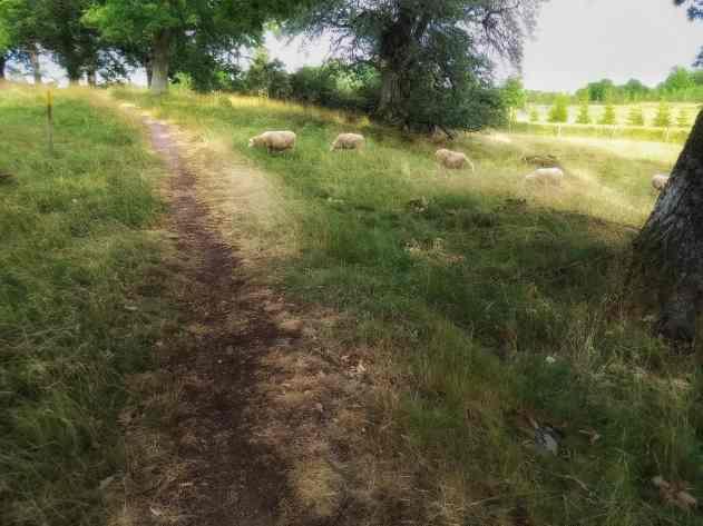 Roadtrip 2017 - Fårhage i Kråkeryd / Roadtrip in Sweden day 1 - Sheep outside in the nature
