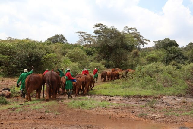 https://i0.wp.com/lugaresepasseios.com.br/wp-content/uploads/2014/05/quenia-david-sheldrick-wildlife-trust-nursery-04.jpg