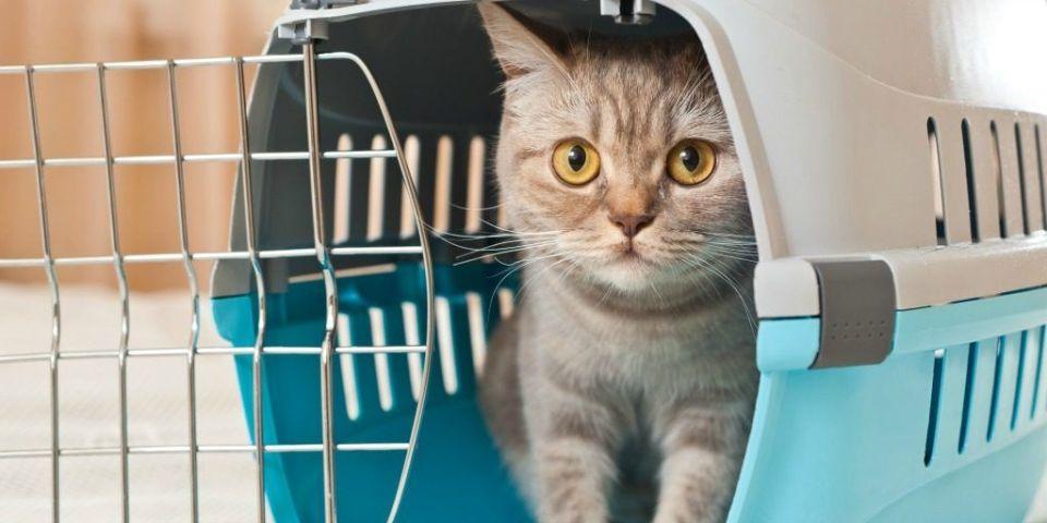 escoger el mejor trasportín para gatos