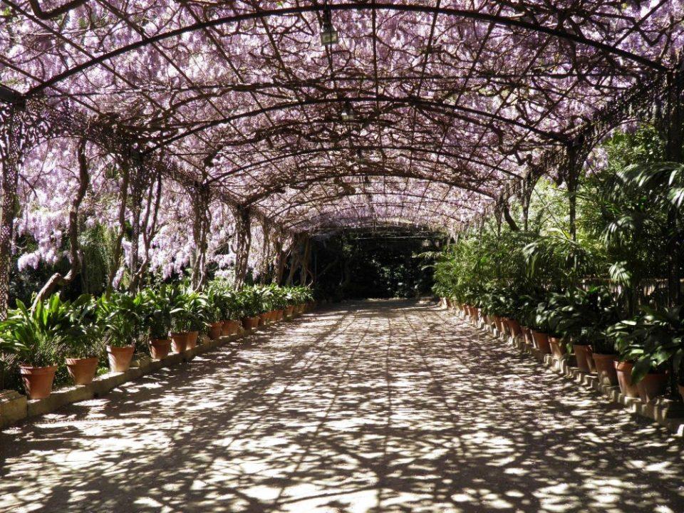 Jardín botánico de Málaga, uno de los jardines de España más sorprendente