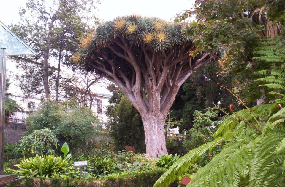 Jardines de España únicos como Hijuela del Botánico en Tenerife