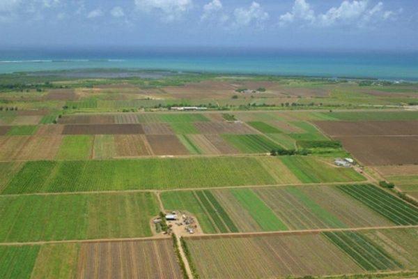 Lugoj Expres Cadastru gratuit pentru proprietarii de terenuri din Lugoj proprietarii de terenuri din Lugoj Cadastru gratuit