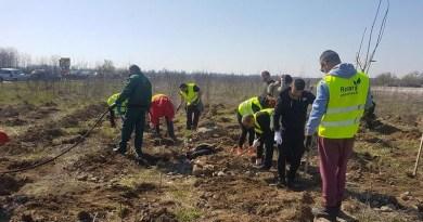 Lugoj Expres Rotary plantează, din nou, la ieșirea din Lugoj stejar roșu Rotary plantează Rotary Lugoj Rotary puieți proiect plantare pădure de salcâmi pădure Lugoj groapă de gunoi campanie arbori