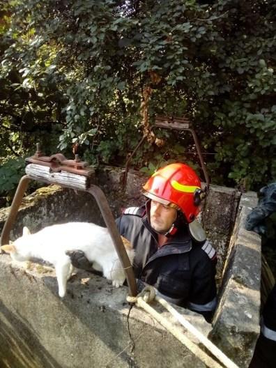 Lugoj Expres Pompierii au salvat o pisică dintr-o fântână viață Topolovățu Mare pompieri pisică ISU Timiș intervenție fântână