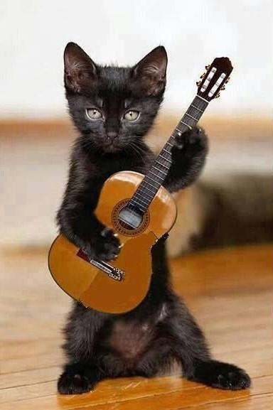 """Résultat de recherche d'images pour """"chat qui joue de la guitare"""""""
