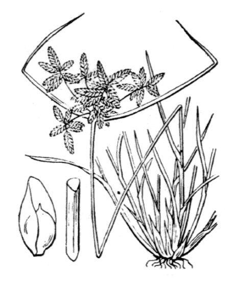Generi Della Flora Italiana Galega