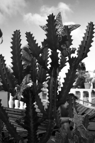 Kaktus-choinka