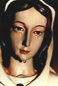rosa mystica weeping261
