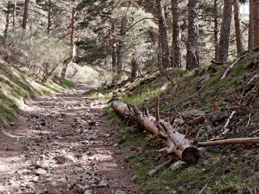 Árbol caido en un sendero del Valle de Fuenfria, Cercedilla, Sierra de Madrid. Fotografía de Luis F. Roncero.
