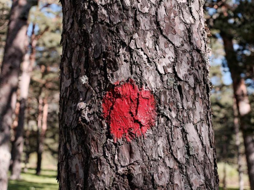 Señal roja para senderistas en un árbol. En la ruta de montaña de La Calle Alta del Valle de Fuenfria en Cercedilla, Madrid. Fotografía de Luis F. Roncero.